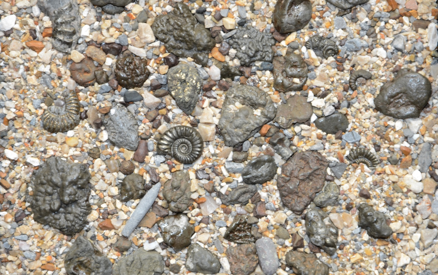 Charmouth fossils and fossil hunting on the jurassic coast for Places that sell fish near me