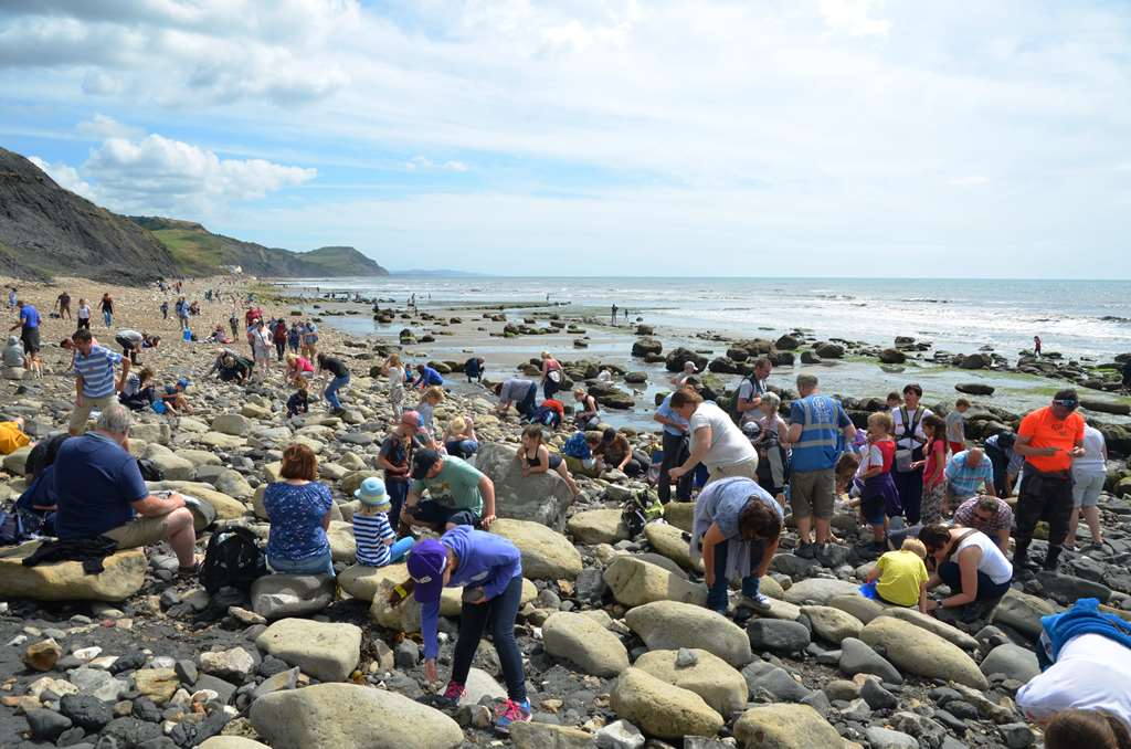 Charmouth and Lyme Regis Fossil Hunting