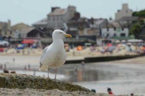 Lyme Regis Parking Problems