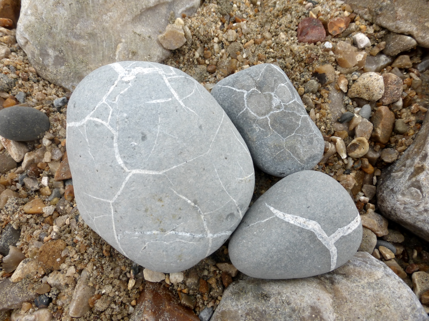 Could these be turtle shells and cracked dinosaur eggs?