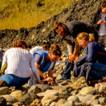 Organised fossil hunting walks