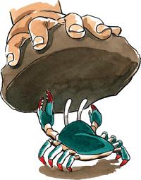 crab under stone