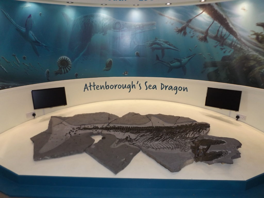 Attenborough S Sea Dragon Charmouth Heritage Coast Centre