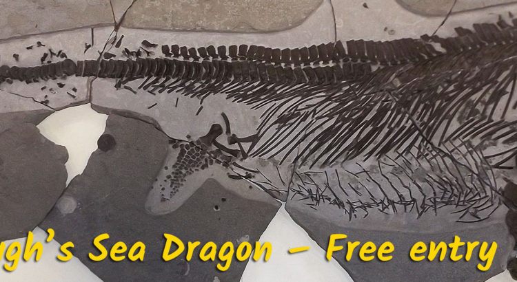 Attenborough's Sea Dragon – Free entry