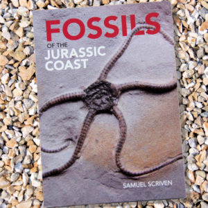 Fossils of the Jurassic Coast
