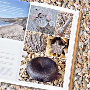 Fossils of the Jurassic Coast