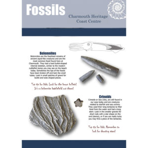 Introduction to Fossil Hunting Video and Guidebook