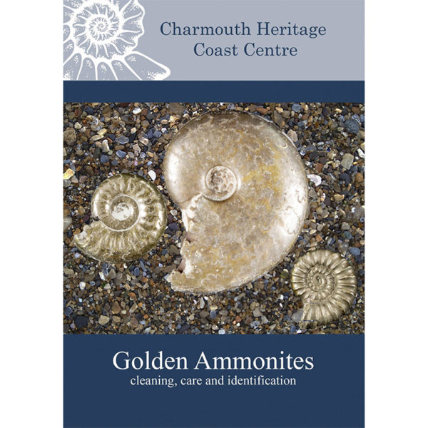 Golden Ammonites: Cleaning, Care, and Identification