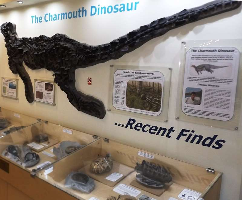 Charmouth Heritage Centre Activities